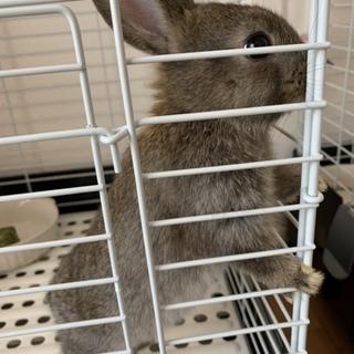 ※交渉中※ミニウサギ