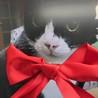 赤いりぼんの日 そして、猫の日