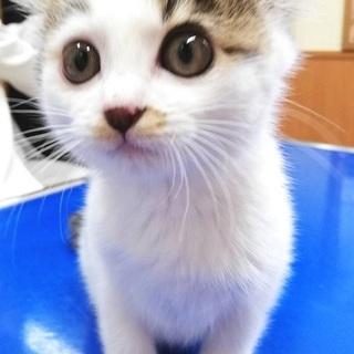 事故猫 幸ちゃん