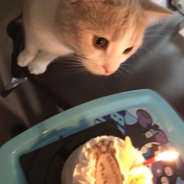 お誕生日おめでとう。:°ஐ..♡*