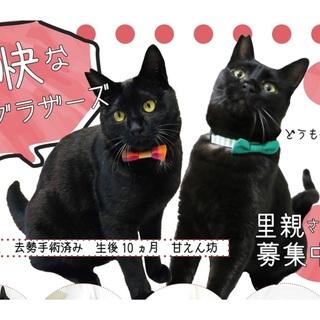 愉快な黒猫ブラザーズ☆【猫飼い初心にもオススメ】