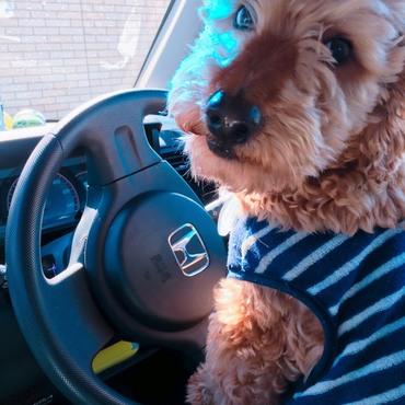 運転中です…無免許です…