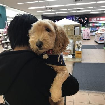 犬連れOKのお店でお買い物です