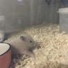 キンクマの赤ちゃん サムネイル2