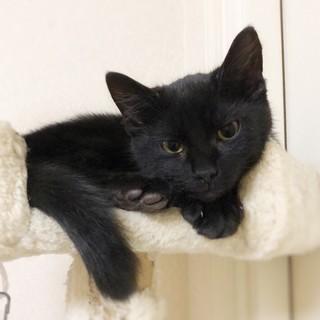 幸せを運んでくれる黒猫ちゃん