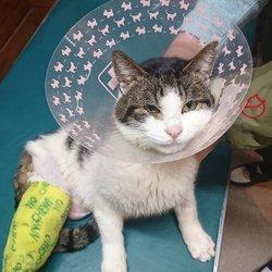 トラバサミで断脚の猫「オラ、がんばるぜぃ~!」