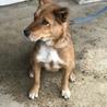 生後1歳ミックス犬