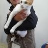 保護猫譲渡会★保健所レスキューの子猫、成猫★川越