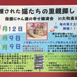 保護にゃん達の幸せ譲渡会in大和高田市