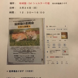3/24(日)保護Catシェルター行徳 ウイング譲渡会開催