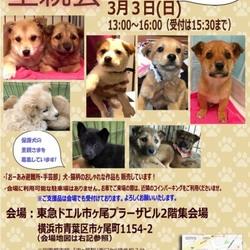 【おーあみ避難所】仔犬祭り♪里親会開催!