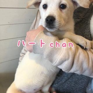 ハート chan ❤️ 3ヶ月