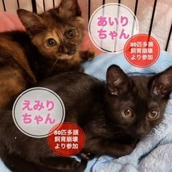 猫の里親会 in 蒲田
