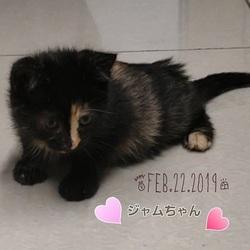 猫の里親会 in 蒲田 サムネイル2
