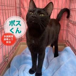 猫の里親会 in 蒲田 サムネイル3
