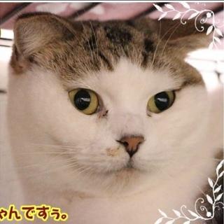 3/1更新『うづき』ふっくら饅頭の可愛いスコティ