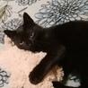 決定☆綺麗な黒猫の遊ぶの大好き子 サムネイル2