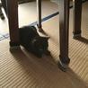 決定☆綺麗な黒猫の遊ぶの大好き子 サムネイル6