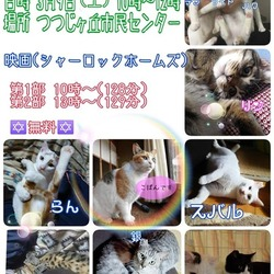 保護猫の譲渡会&映画試写会 三重県名張市