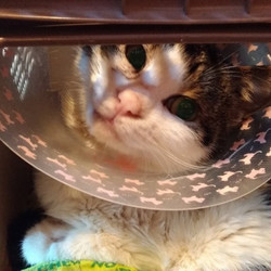 トラバサミで断脚の猫「オラの足、楽しみだぞ~」