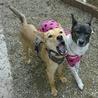 スタイル抜群、ずばぬけた運動能力の屋久島犬 サムネイル2