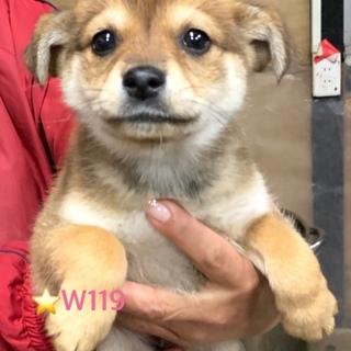W119 可愛い子犬です。