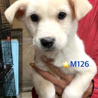 M126 可愛い子犬です。