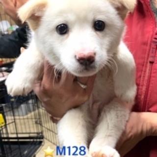 M128 可愛い子犬です。