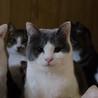 美猫さん!優しく、おとなしい性格です