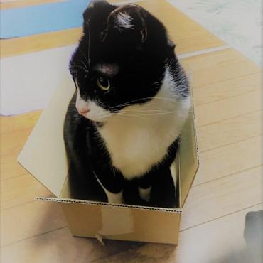 箱入り娘だから・・・箱に入ってます。 by霞