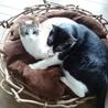 鳥の巣ならぬ 猫の巣☆ 友達にいただいたクズのツルで♪