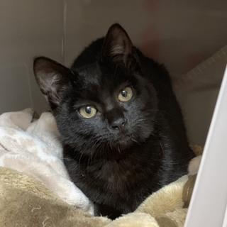 真っ黒猫の紅ほっぺちゃん6ヶ月