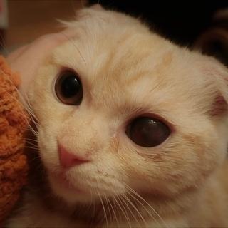 抱っこ猫、人大好きです。