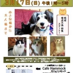 三鷹で猫の譲渡会を行います❤️奄美大島 ・琉球特集スタート‼️