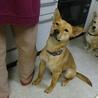 スタイル抜群、ずばぬけた運動能力の屋久島犬 サムネイル6