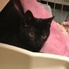 とにかく可愛い黒猫ちゃんの瑠衣君 サムネイル2