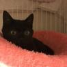 とにかく可愛い黒猫ちゃんの瑠衣君 サムネイル3