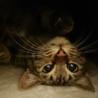 生後4・5ヶ月メス子猫