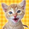 埼玉県さいたま市を拠点としての野良猫の保護活動、里親探し、猫の譲渡会等をしています。