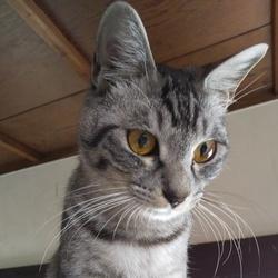 猫の譲渡会  緑区徳重にて