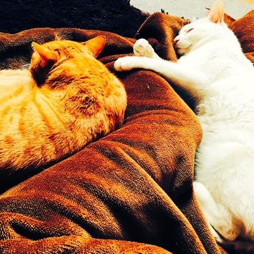 真っ白なユキちゃんは眠るのが大好き