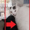 大きい猫(8キロ)