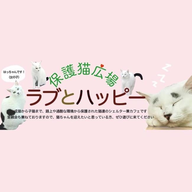 保護猫広場ラブとハッピーのカバー写真