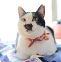 お茶目で穏やかな和猫の小梅さん♩