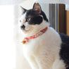 お茶目で穏やかな和猫の小梅さん♩ サムネイル2