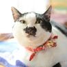お茶目で穏やかな和猫の小梅さん♩ サムネイル3