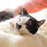 お茶目で穏やかな和猫の小梅さん♩ サムネイル5