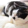 お茶目で穏やかな和猫の小梅さん♩ サムネイル6