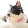 お茶目で穏やかな和猫の小梅さん♩ サムネイル7