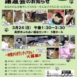 こちら肉球クラブ主催猫の譲渡会